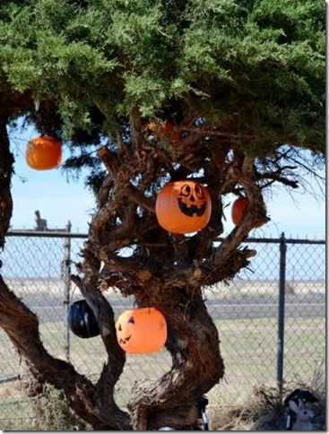 pumpkin tree
