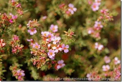 2826 Camino La Costa(Tomillo marino herbáceo)