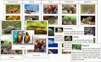 The Animal Kingdom and Vertebrate Sorting Cards