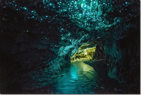 Glow-worm-cave-new-zealand[4]
