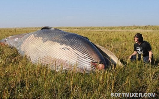 whale-in-a-field-1-e1335333914949_thumb[5]