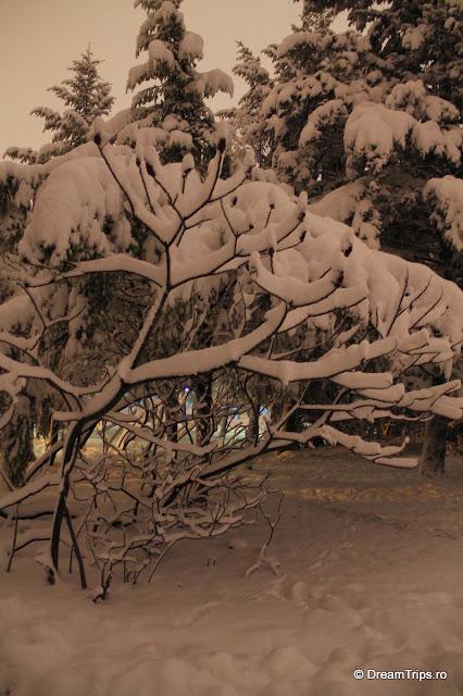 Noapte_de_iarna_1959.JPG