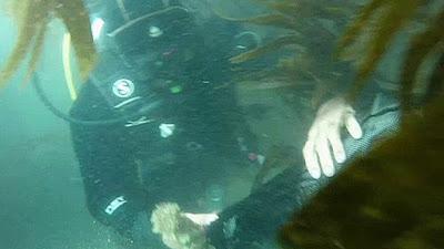 Thợ lặn thu nhặt rác dưới đáy đại dương