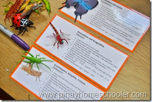 Insect Learning Cards