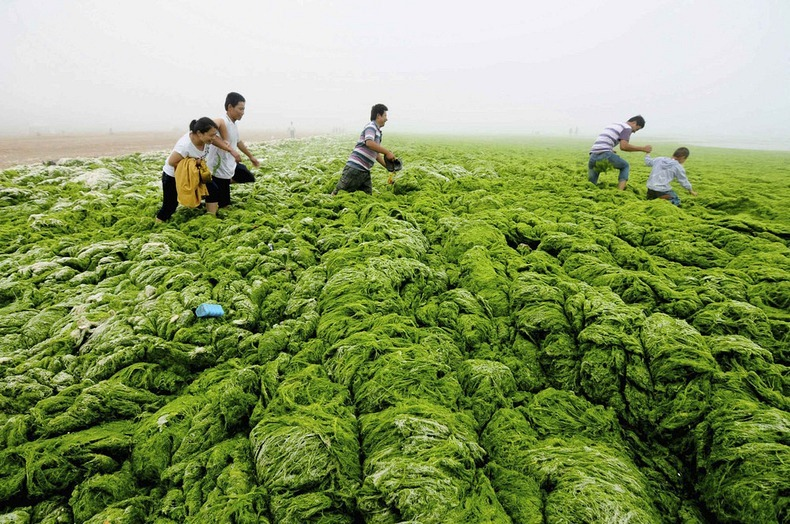 algae-china-beach-4