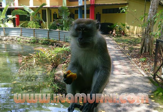 Monyet di taman ikan air tawar