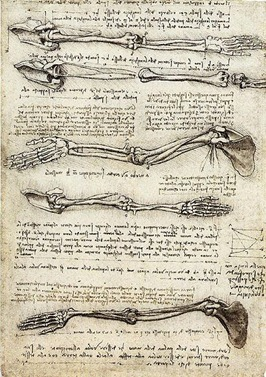 leonardo anatomy bone sketches