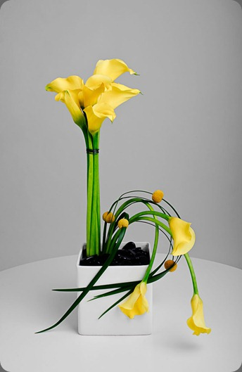 20100125-458 bloomersflowers.blogspot