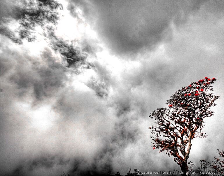 Rhodendron tree against sky clouds coloured
