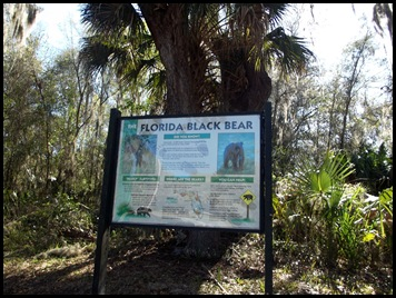 Manatee and Black Bear Trail 062