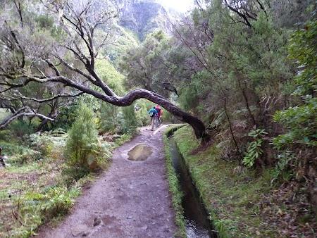 Revelion 2014:  Levadas in Madeira