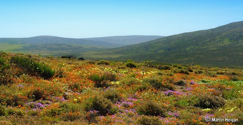 Namaqualand-flowers-0
