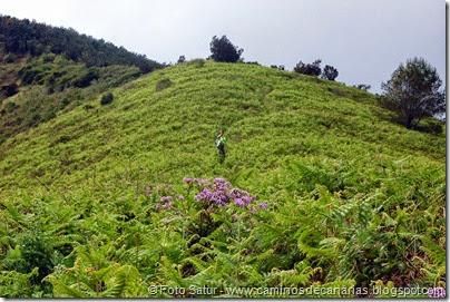 7955 Circular a Firgas R3-Pico del Rayo