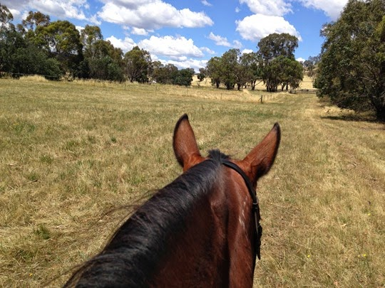 Will do this - loads of this! - A Riding Habit
