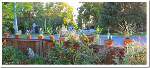 131026_pots-on-front-yard-fence_03