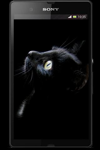 Dark Black Wallpaper 2013 - screenshot