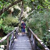 South Island - Milford Sound - Rainforest