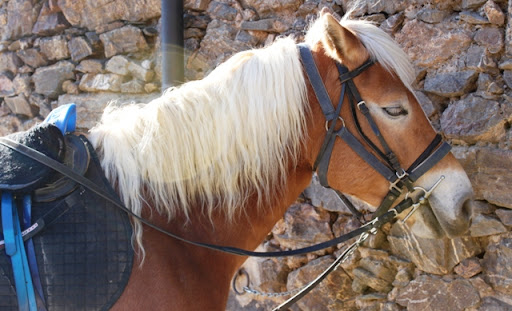 Cavalls1.JPG