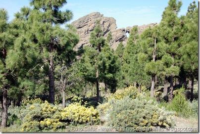 5796 Pico las Nieves-Temisas