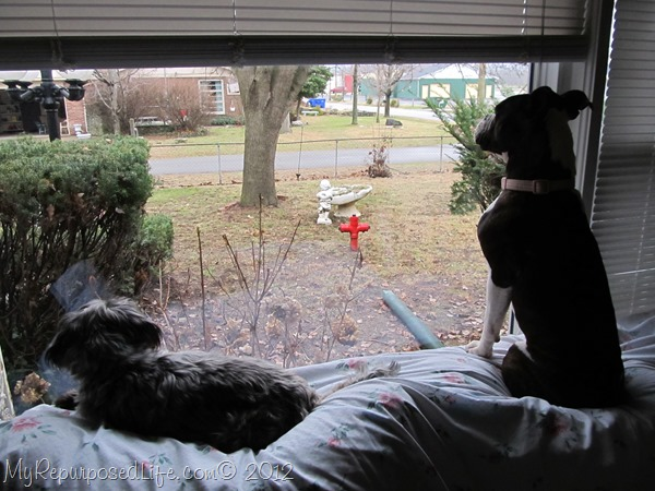 dogs on guard