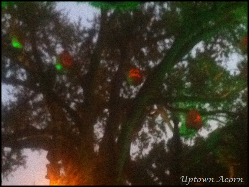 pumpkins in tree