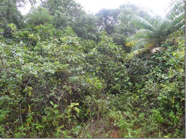 BR-319_Humaita_Manaus_Day_2_DSC05486