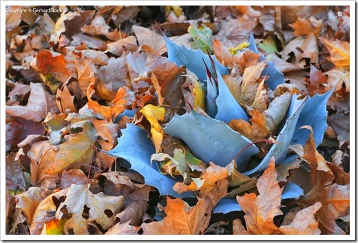 131122_home_leaves_11