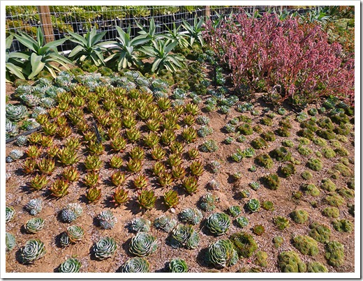 111001_succulent_gardens_01_fixed
