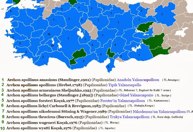 Les sous-espèces d'Archon apollinus en Turquie. http://www.adamerkelebek.org/IcerikDetay.asp?IcerikKatId=2&TurId=177