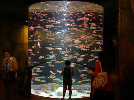 Acvariu Hotel Atlantis