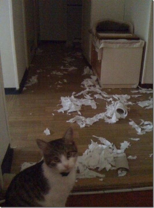 funny-cats-dogs-destroy-house-006