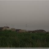 Trelleborg - Blick auf die vernebelte Ostsee