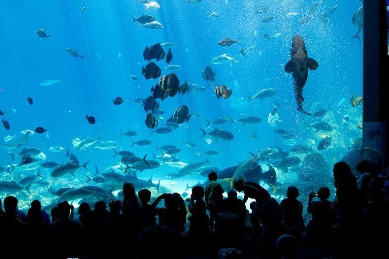 Georgia Aquarium The Largest Aquarium In The World Amusing Planet