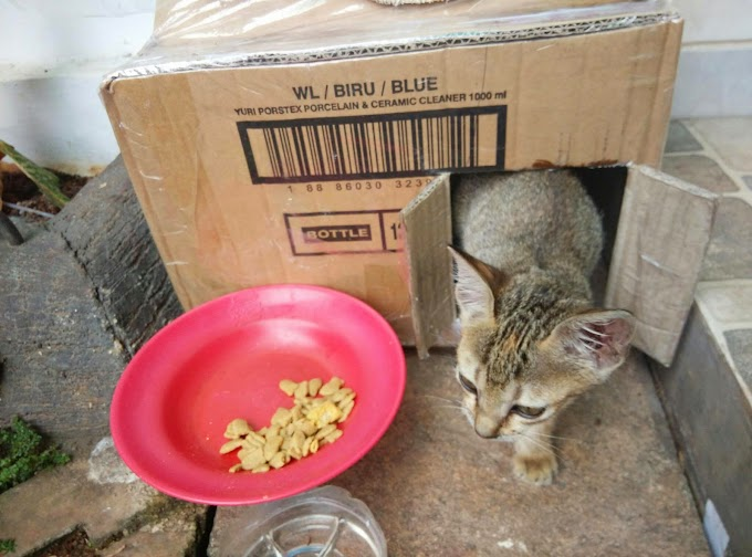 Hak Kucing Untuk Tetap Hidup