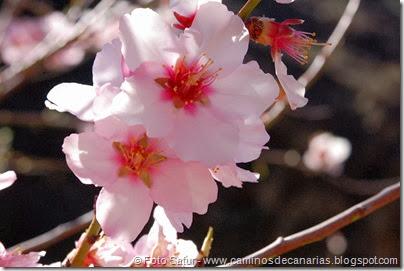7451 La Goleta-La Candelilla(Flor Almendro)