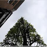 eckige Bäume, die sind verückt