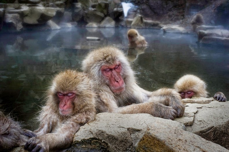 snow-monkeys-jigokudani-9