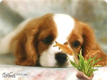 Você tem algum amigo/animal?