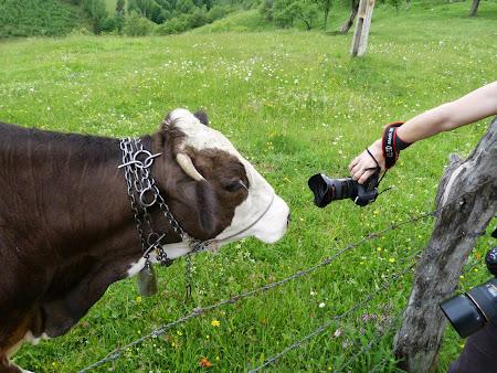 29. Cu vaca la fotograf.JPG