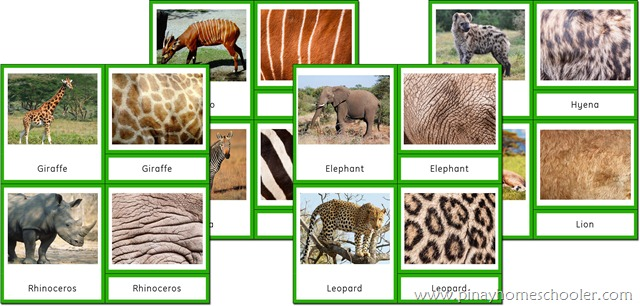 Africa Continent Animals and their Skin Patterns