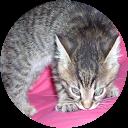 Immagine del profilo di antonella guidi