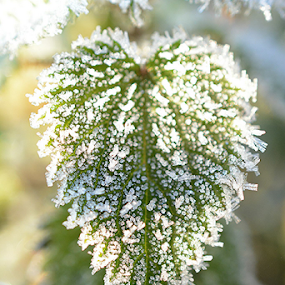 Frost by Faillie Photos - Nature Up Close Leaves & Grasses ( leaves,  )
