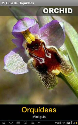 Orquídeas Mini Guía