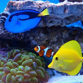 Tropical fish by Name of Rose - Animals Fish ( tropical fish aquarium )