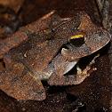 Wokan Cannibal Frog