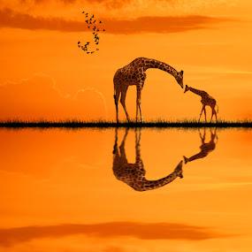 Where are you my light ? by George Leontaras - Digital Art Animals ( orange, hellas, volos, greece, art, fine art, girafe, photoshop.glart, lake, digital, birds, manipulation )