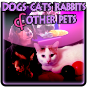 Dogs Cats Rabbits and Pets