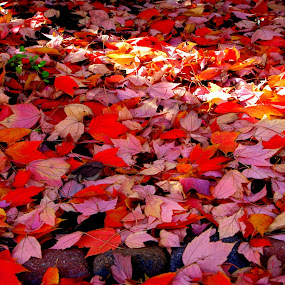 by John Hale - Nature Up Close Leaves & Grasses ( fall leaves on ground, fall leaves )