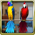 Talking Parrot Couple Free icon