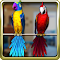 Talking Parrot Couple Free 1.1.4 Apk
